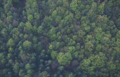 Vy över skog